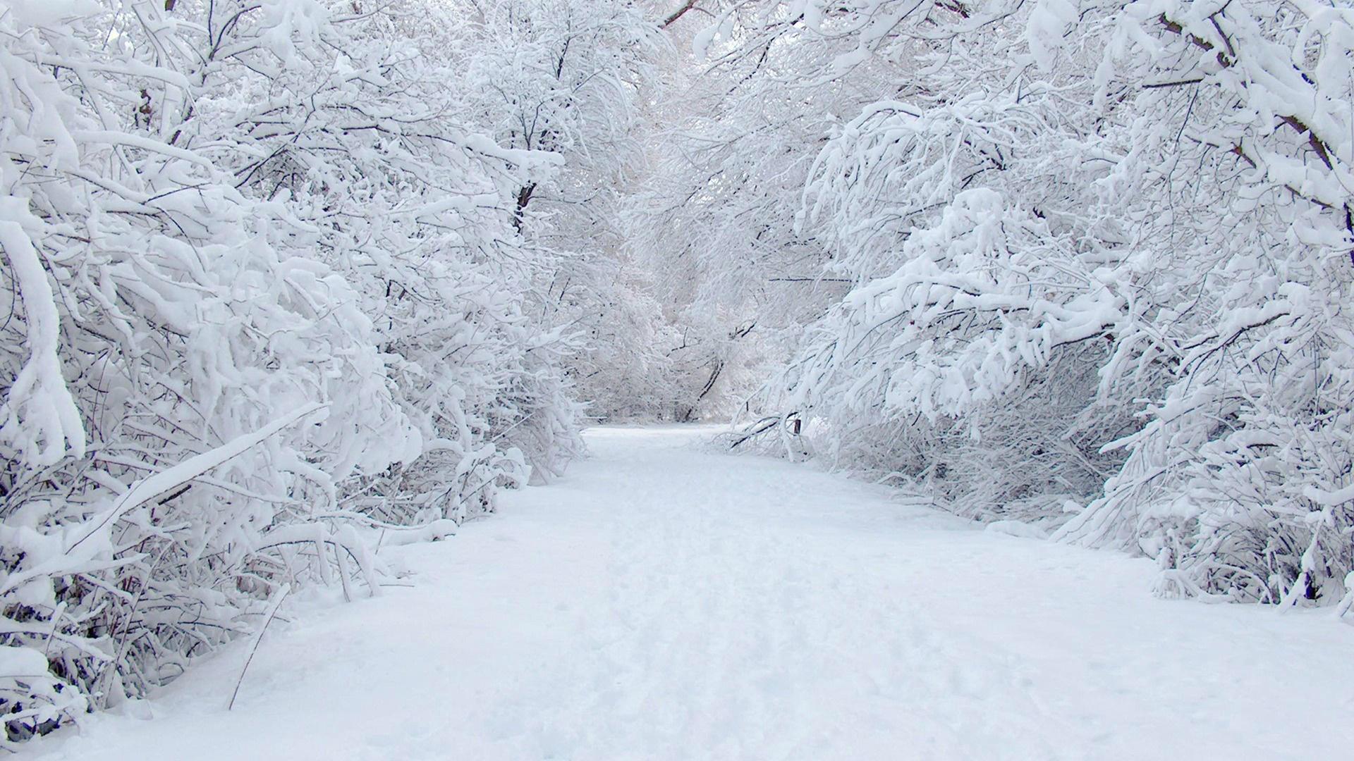 живые обои зима скачать бесплатно на рабочий стол