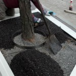 Flexi-Pave installed around a tree